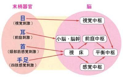 頭や身体の位置の認知機構
